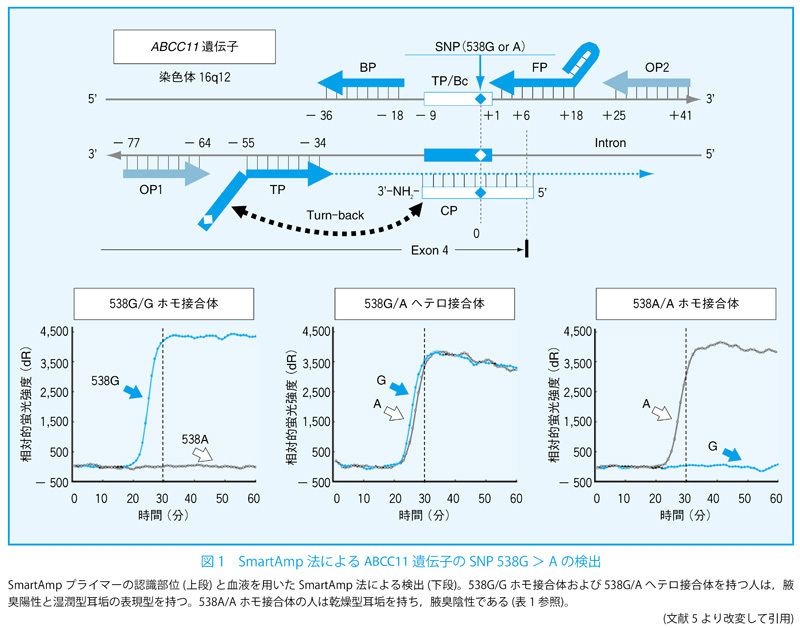 フリーワード出版年疾患・領域疾患・領域診療科目診療科目媒体媒体記事体裁第69回SNP解析に基づくオーダーメイド医療 迅速SNP診断技術の臨床応用:腋臭症の診断におけるヒトABCC11 (MRP8) 遺伝子のSNP検出フリーワード出版年疾患・領域疾患・領域診療科目診療科目媒体媒体記事体裁M-Review関連サイトサービス